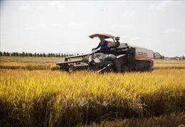 Đẩy mạnh ứng dụng công nghệ cao vào sản xuất nông nghiệp