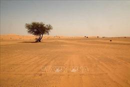 WB sẽ đầu tư hơn 5 tỷ USD cải thiện cảnh quan các vùng khô hạn ở châu Phi