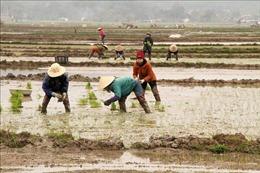Hơn 21% diện tích gieo cấy vụ Đông Xuân2020 - 2021 có nước
