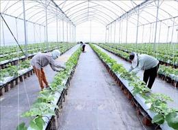 Ưu tiên nguồn lực, tập trung tái cơ cấu ngành nông nghiệp