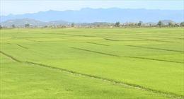 Đắk Nông công nhận 3 vùng sản xuất nông sản ứng dụng công nghệ cao