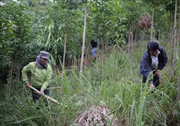 Đổi thay trên các bản tái định cư ở tỉnh biên giới Lai Châu