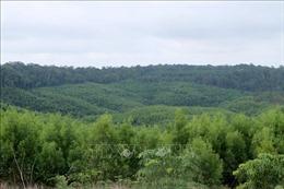 Đắk Nông đề xuất đưa hơn 450 ha ra khỏi quy hoạch ba loại rừng