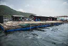 Huy động gần 12.700 tỷ đồng phát triển nuôi biển