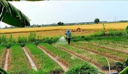 Chuyển đổi cơ cấu cây trồng, tăng diện tích cây trồng cần ít nước