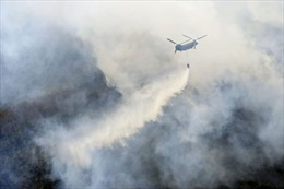Cháy rừng nghiêm trọng gần Tokyo