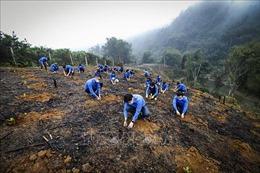 Hưởng ứng Tháng thanh niên và Tết trồng câytại Hoà Bình