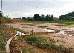 Người dân bức xúc vì bùn đất tràn vào ruộng