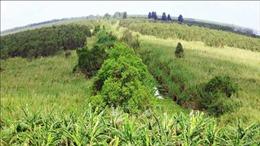 Phát huy hiệu quả mô hình kinh tế gắn với bảo vệ rừng ở Cà Mau
