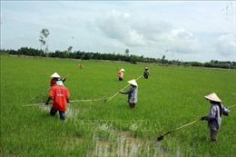 Khuyến khích nông dân sử dụng giống lúa chất lượng cao, đạt tiêu chuẩn xuất khẩu