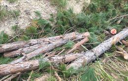 Lâm Đồng: Xử phạt nặng nhiều đối tượng phá rừng, lấn chiếm đất