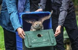 Tịchthu 9con chim hoang dã nuôi nhốt tại nhà riêng