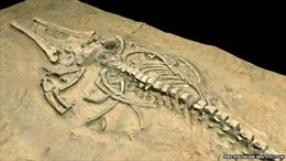 Phát hiện hóa thạch động vật có vú niên đại 72 triệu năm trước đây
