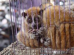 WHO kêu gọi chấm dứt buôn bán động vật hoang dã còn sống ở chợdân sinh