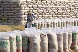 Thị trường nông sản thế giới tuần qua: Giá gạo của các quốc gia xuất khẩu hàng đầu đều giảm