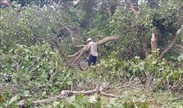 Mưa lớn, dông lốc ở Bình Phước làm hơn 30 căn nhà bị sập, tốc mái