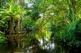 'Sức mạnh'đặc biệt của rừng mưa ở châu Phi