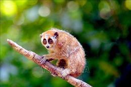 Phát hành 'Hướng dẫn thực thi pháp luật về bảo vệ động vật hoang dã 2021'