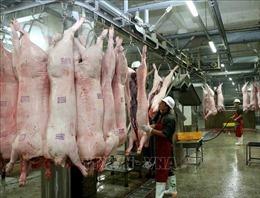 Giá lợn hơi trong dân xuống dưới 50.000 đồng/kg