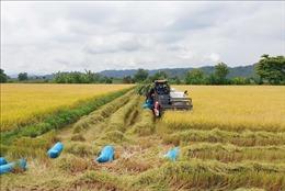 Nâng tầm cho sản phẩm lúa gạo