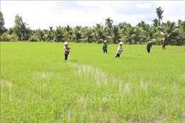 Cần giải bài toán thiếu lao động trong nông nghiệp