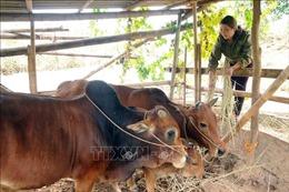 Sơn La: Hộ gia đình người Thái được ngưỡng mộ vì sản xuất, kinh doanh giỏi