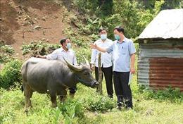 Ngăn chặn dịch bệnh trên đàn gia súc