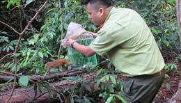 Giải cứu 157cá thể động vật hoang dã