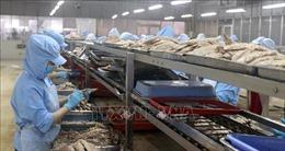 Kiên Giang mở rộng vùng xanh an toàn sản xuất