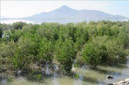 Bảo vệ, phát triển rừng phòng hộ gắn với ứng phó biến đổi khí hậu
