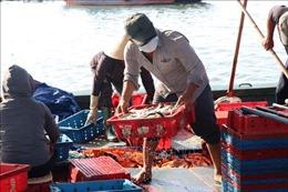 Tấp nập cảng cá Thuận An trong điều kiện đảm bảo phòng, chống dịch