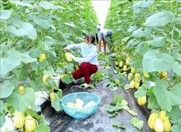 Bắc Giang hỗ trợ tài chính cho các hợp tác xã nông nghiệp