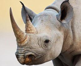 Chữa sốt co giật bằng sừng tê giác, bé 22 tháng tuổi bị xanh tím toàn thân