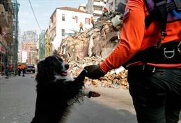 Phát hiện tín hiệu nạn nhân còn sống dưới đống đổ nát sau vụ nổ ở cảng Beirut