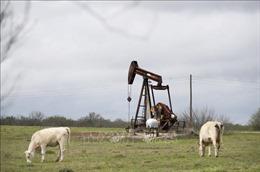 Ngành dầu khí Texas coi ông Biden thắng cử là mối đe dọa lớn nhất