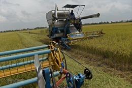 Việt Nam sắp vượt Thái Lan trở thành nhà xuất khẩu gạo lớn thứ hai thế giới