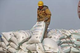 Trung Quốc nhập khẩu đậu tương của Mỹ với số lượng kỉ lục trong năm 2020