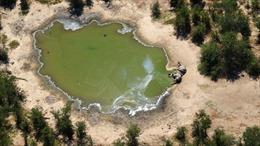 Tìm ra nguyên nhân khiến 330 con voi ở Botswana chết bất thường