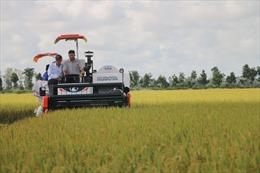 60 tấn gạo Việt Nam đầu tiên được nhập khẩu vào Anh theo UKVFTA
