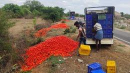 Nông dân Ấn Độ đổ đống cà chua vì giao thương đứt gãy trong dịch COVID-19
