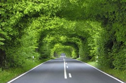 9 đường hầm cây xanh đẹp 'đốn tim' trên thế giới