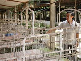 Lo ngại bệnh dịch tả lợn châu Phi, giá lợn hơi tăng vọt