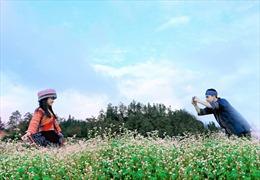 Khám phá đồi hoa tam giác mạch lớn nhất Sa Pa