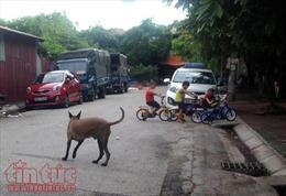 Giảm 80% số chó thả rông tại quận Thanh Xuân