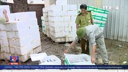 Tiêu hủy hơn 5 tấn các loại nấm không rõ nguồn gốc