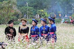 Cánh đồng hoa tam giác mạch đẹp ngất ngây ở Hà Nội