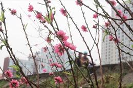 Thời tiết ngày 2/2: Miền Bắc nhiệt độ tăng, nắng ấm ngày đầu nghỉ Tết