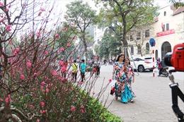 Phố phường Hà Nội bừng sáng không khí Xuân, mô hình lợn trang trí 'lên ngôi'  ở mọi chỗ