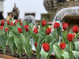 Xuân ngất ngây ở 'xứ hoa nở trong mây'