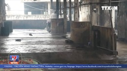 Đóng cửa lò mổ gây ô nhiễm môi trường nghiêm trọng ở Nghệ An